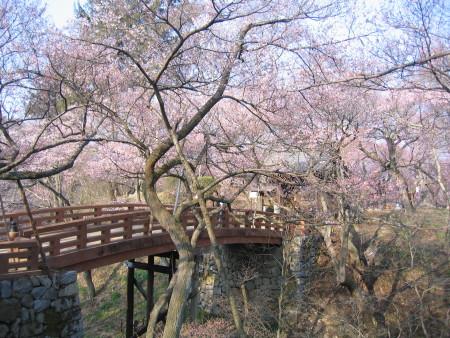 菱蔵池田ホテル 木内芝桜 高遠 身延 046